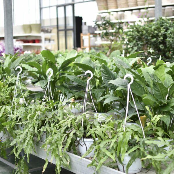 piante-da-giardino-sassari