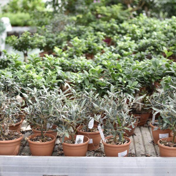 piante-da-interno-sassari